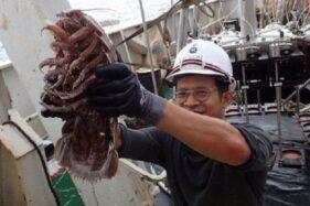 Kecoa Raksasa Bathynomus Jenis Baru Ditemukan di Laut Indonesia