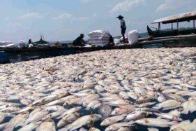 Ilustrasi ikan di keramba nelayan Sragen di Waduk Kedung Ombo mati. Foto kejadian pada 2016.(Solopos.com/Moh Khodiq Duhri)