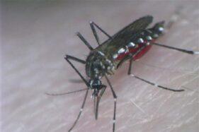 Awas! Demam Berdarah Dengue Serang Semua Kecamatan di Klaten