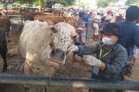 Gegara Pandemi Covid-19, Penjualan Hewan Kurban di Klaten Anjlok