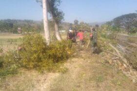 Hiii...Banyak Ular Keluar Saat Pohon-Pohon di Tanggul Sungai Situri Sukoharjo Ditebang
