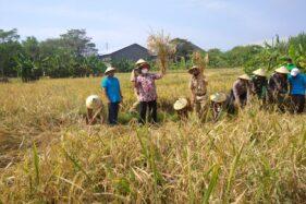 BPTP Jateng Apresiasi Pertanian Organik di Jaten Karanganyar