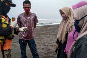 Ada Ubur-ubur Api di Pantai Kulonprogo, Sengatannya Menyakitkan Lho