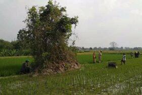 Tim BPCB memeriksa benda cagar budaya di sawah milik warga Desa Keprabon, Polanharjo, Klaten, yang bakal dilintasi jalan tol Solo-Jogja, beberapa waktu lalu. (Istimewa)
