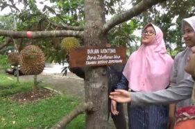 Alasan Taman Botani Sukorambi Wajib Didatangi Para Penyuka Durian