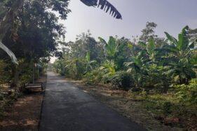 Asale Desa Tanjung di Nguter Sukoharjo: Dulu Hutan Belantara Banyak Pohon Tanjung
