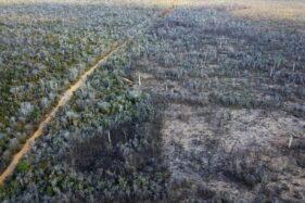 4 Hutan di Dunia Ini Kondang Paling Angker, Berani ke sana?