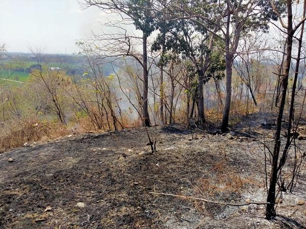 Lahan pohon jati dan semak-semak di wilayah Karangpung, Lorog, Kecamatan Tawangsari, Sukoharjo, yang terbakar pada Minggu (2/8/2020). (Istimewa/Pemadam Kebakaran Sukoharjo)