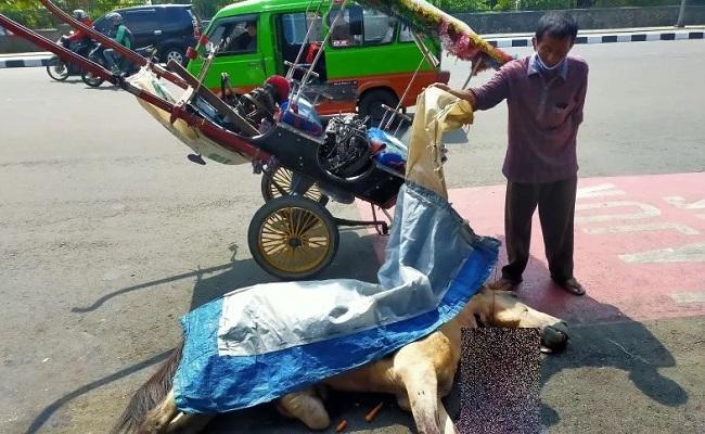 Dipaksa Kerja Pas Sakit, Kuda Delman Mati Kelelahan