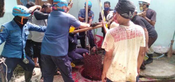 Sapi Kurban Nyemplung ke Sumur Masjid, Damkar Semarang Dikerahkan