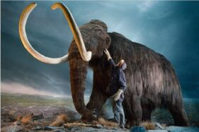 Penampakan sosok Mammoth yang telah punah sejak 120.000 tahun silam, Selasa (8/9/2020). (Nytimes.com)