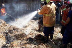 Gegara Bakar Sampah, Kandang Ternak di Gemolong Sragen Kebakaran
