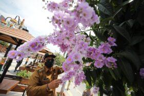 Wali Kota Madiun, Maidi, melihat bunga bungur yang ada di Taman Sumber Wangi di Jl. Pahlawan. (Istimewa/Pemkot Madiun)