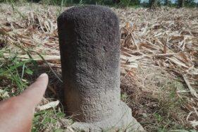 Lingga Patok Diduga Peninggalan Mataram Kuno Ditemukan di Lahan Tebu di Klaten