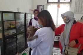 Sejumlah petugas menyuntikkan vaksin rabies ke tubuh seekor kera di Dinas Pertanian dan Perikanan Sukoharjo, Senin (28/9/2020). (Solopos/Bony Eko Wicaksono)