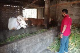 Sapi warga Jombang dicuri (Foto: Enggran Eko Budianto/detikcom)