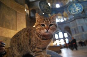 Gli, Kucing Kesayangan Hagia Sophia Turki Sakit, Doa Terpanjat baginya
