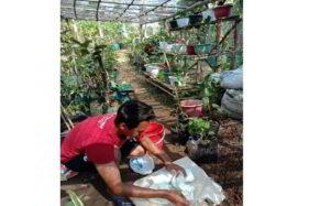 Pemuda asal Desa Sambirejo, Kecamatan Geger, Kabupaten Madiun, Irwan Budiyanto, memanfaatkan gel yang ada di dalam popok sekali pakai untuk dijadikan media tanam. (Istimewa)
