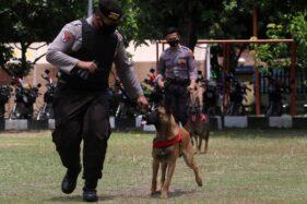 Kenalkan 2 Anjing Pelacak Baru Polresta Solo, Jago Nyari Bahan Peledak