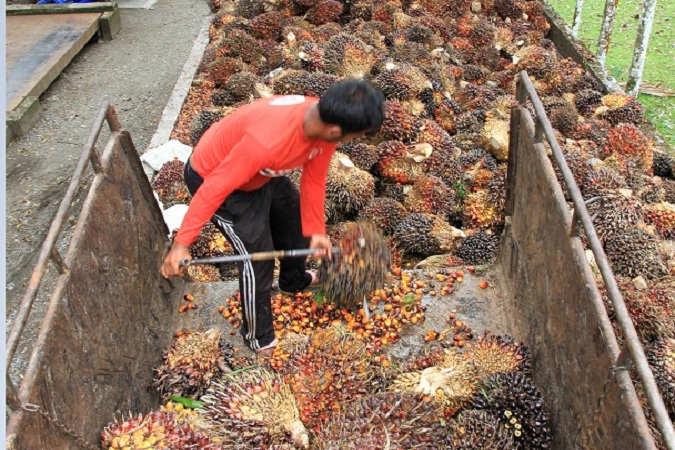Indonesia Jadi Produsen Kelapa Sawit Terbesar di Dunia, Isu Negatif Terus Menghantui