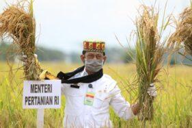 Stok Beras Melimpah, Mentan Syahrul Sampaikan Terimakasih Atas Kerja Keras Para Petani
