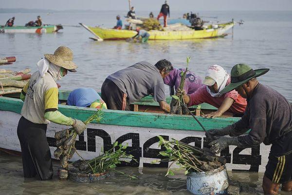 Menghijaukan Sekaligus Dukung Pemulihan Ekonomi, BPDASHL Solo Tanam 330.000 Mangrove di Gresik