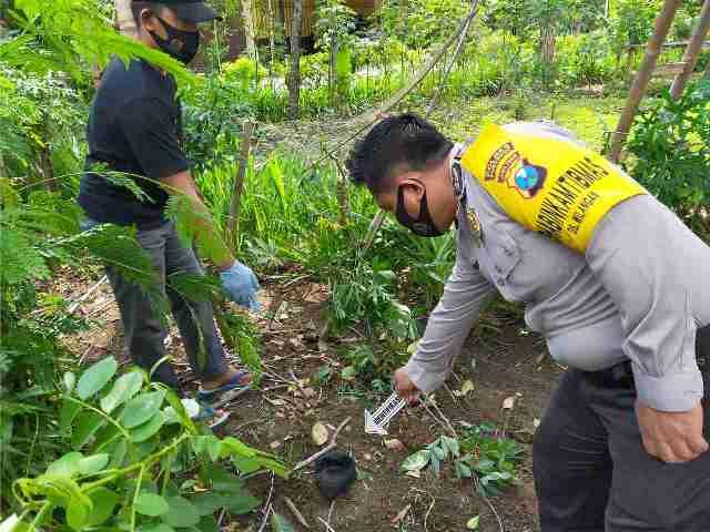 Polisi menunjukkan lokasi kejadian terjatuhnya petani dari pohon di Desa Bulu, Kecamatan Sambit, Kabupaten Ponorogo, Kamis (29/10/2020). (Itribratanewsponorogo.com)