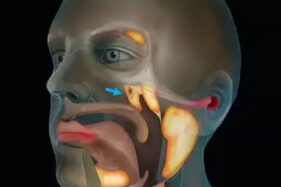 Organ tubuh manusia baru yang ditemukan ilmuwan (Detik.com).