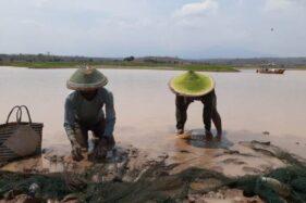 Waduk Dawuhan Madiun Mengering Bawa Berkah, Warga Panen Ikan Berbulan-Bulan