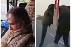 Gajah Begal Bus demi Pisang di India, Viral Karena Buktikan Habitat Terkikis