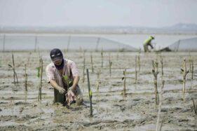 BPDASHL Solo Mulai Penanaman Mangrove di Pangkah Kulon Gresik