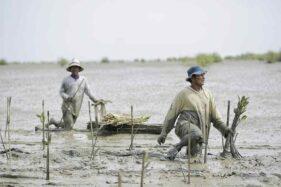 Penanaman Mangrove Sebagai Salah Satu Upaya Pemulihan Ekonomi