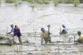 Padat Karya Penanaman Mangrove, Bantu Ekonomi Warga Randuboto