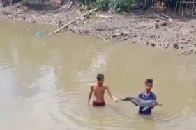 Penemuan seekor anak lumba-lumba di aliran Sungai Krueng Musa, Kabupaten Aceh Timur, Provinsi Aceh, Sabtu (21/11/2020), menggemparkan warga. (instagram-@acehredaksi)