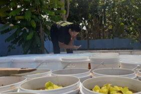 Arnovian Pratikna melihat kondisi ikan cupang yang sedang dibudidayakan, Selasa (17/11/2020). (Abdul Jalil/Madiunpos.com)