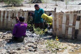 Pelaksaan program Padat Karya Penanaman Mangrove yang dilakukan Balai Pengelolaan Daerah Aliran Sungai dan Hutan Lindung (BPDASHL) Solo (istimewa)