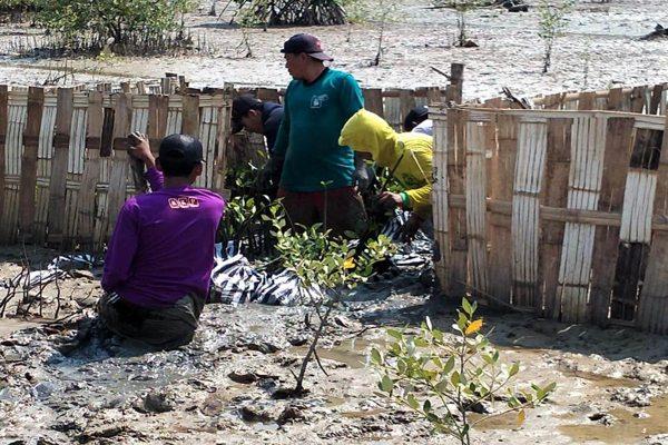 Warga Desa Banyu Urip Antusias Ikuti Program Penanaman Mangrove BPDASHL Solo