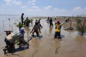 Program Padat Karya Penanaman Mangrove yang dilakukan Balai Pengelolaan Daerah Aliran Sungai dan Hutan Lindung (BPDASHL) Solo. istimewa)