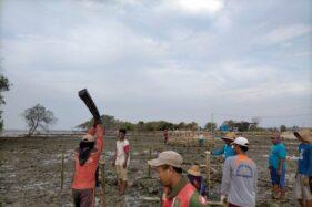 Pelaksaan program Padat Karya Penanaman Mangrove yang dilakukan Balai Pengelolaan Daerah Aliran Sungai dan Hutan Lindung (BPDASHL) Solo. (istimewa)