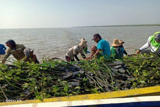 Pelaksanaan program Penanaman Mangrove Intensif yang dilakukan oleh BPDASHL Solo (khusus)