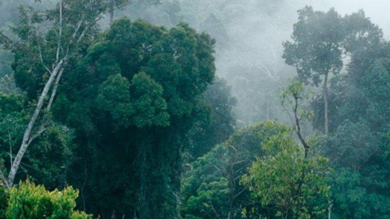 Hutan Itu Indonesia Ajak Generasi Z Jaga Hutan