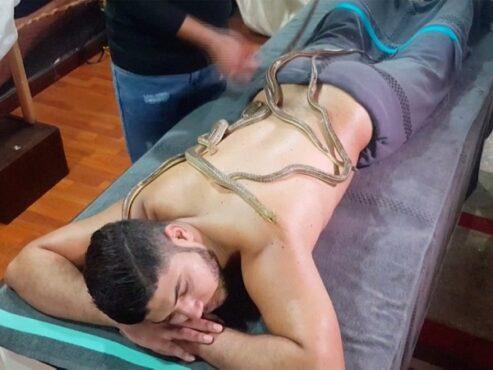 Pijat ular ini membuat tubuh menjadi rileks dan tenang. (New York Post)