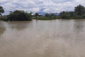 Cuaca Ekstrem, 5.000 Hektare Sawah di Jateng Terendam Banjir
