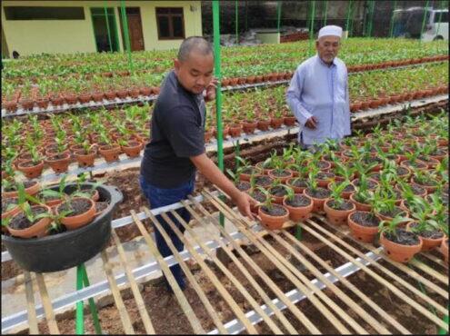Pemilik Kebun Anggrek, Gino (kanan), 66, tengah menata tanaman Anggrek di kebun miliknya, Desa Tegiri, Kecamatan Batuwarno, Wonogiri, Sabtu (23/1/2021). (Solopos.com/M. Aris Munandar)