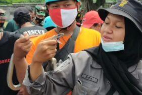 Kisah Syifa, Gadis Remaja Penyelamat Ular Asal Solo: Awalnya Takut, Lama-Lama Terbiasa