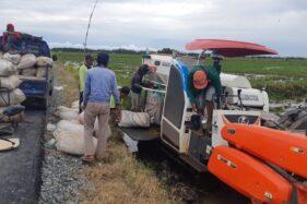 Lahan Food Estate di Kalteng Siap Panen, Petani Raih Hasil Memuaskan