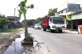 Bahayakan Pengendara, Lubang Jalan Sragen-Balong Ditanami Pohon Pisang