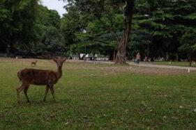 Dibuka Lagi, Taman Balekambang Solo Sepi Pol