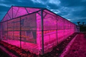 Program Electrifying Agriculture, Bukti Kepedulian PLN Terhadap Pertanian di Indonesia