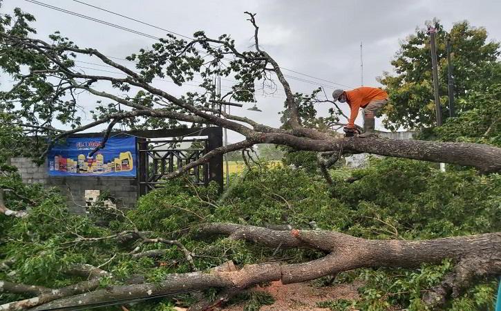 Diterjang Hujan Angin, Sejumlah Pohon di Sukoharjo Tumbang Tutupi Jalan